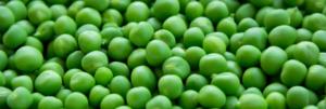 Was ist Erbsenprotein